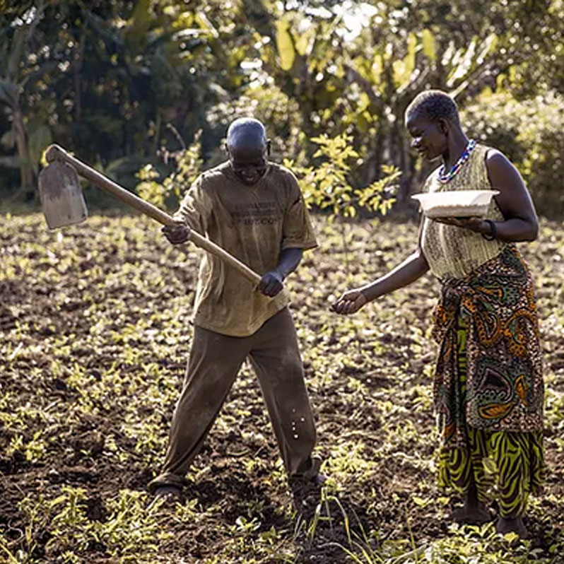 Man and woman planting seeds in field